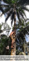7-organic-palm-sugar-factory-java