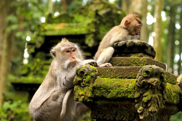 Image result for kedaton monkey forest bali