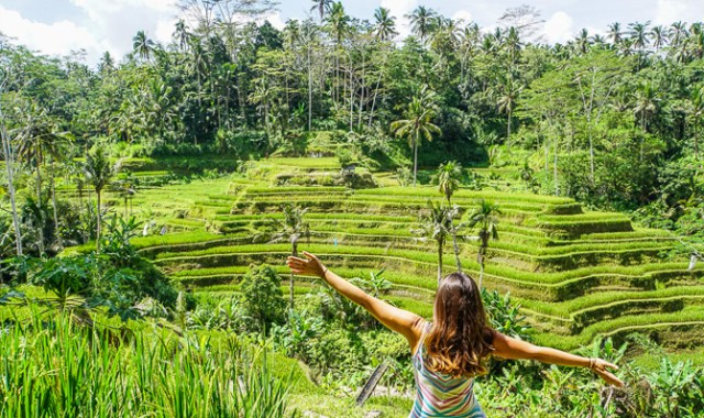 Image result for tegalalang rice field
