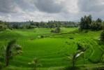 rice-terraces-384665_1920