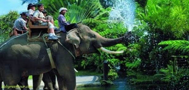 Bakas Elephant Ride Tour - Bakas Elephant Park - Bali Green Tour