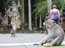 Sangeh Monkey Forest - Bali Interest Place to visit