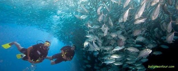 Tulamben Diving Tour, Bali Marine Sports Activities, Bali Dive Safari, Bali Green Tour