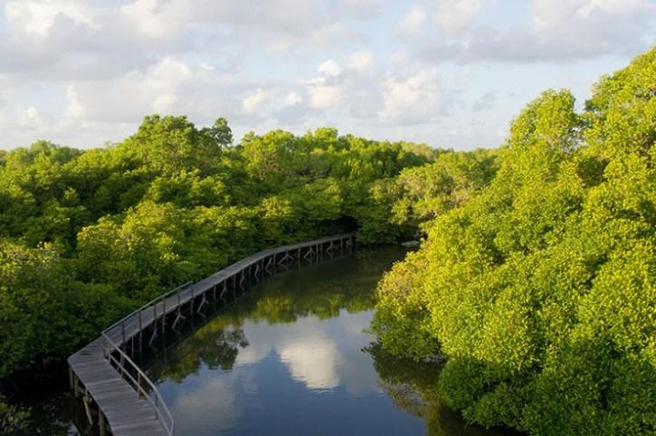 18-mangrove-boardwalk-by-baliislandadventuretours-1-740x492