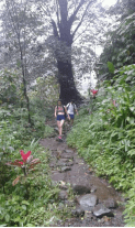 hiking-route-to-sekumpul-waterfalls