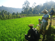 learn about Subak in Mayong Village Bali
