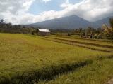 hiking around Jatiluwih Rice field with Bali Jungle Trekking