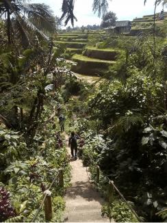Local Guide for jatiluwih trekking