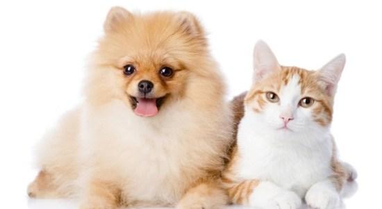 Balikpapanku - kucing dan anjing dapa melatih mental anda