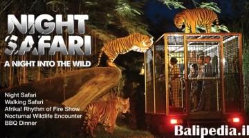 Harga Tiket Night Safari Bali 2018 – Intip Yuk!