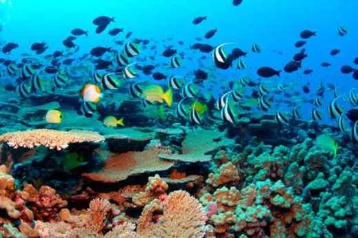amed-beach-snorkeling-tour-14149544878ng4k