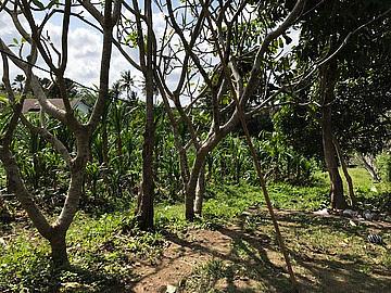 Land 6019m LCGU 601 for sale in Pererenan Canggu Bali