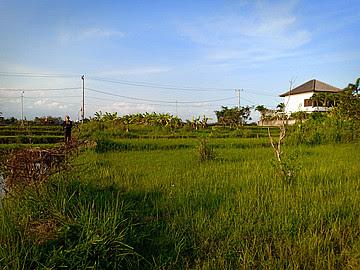 Land 1325m LTAB 132 Free hold for sale in Kedungu Tabanan Tanah Lot Bali
