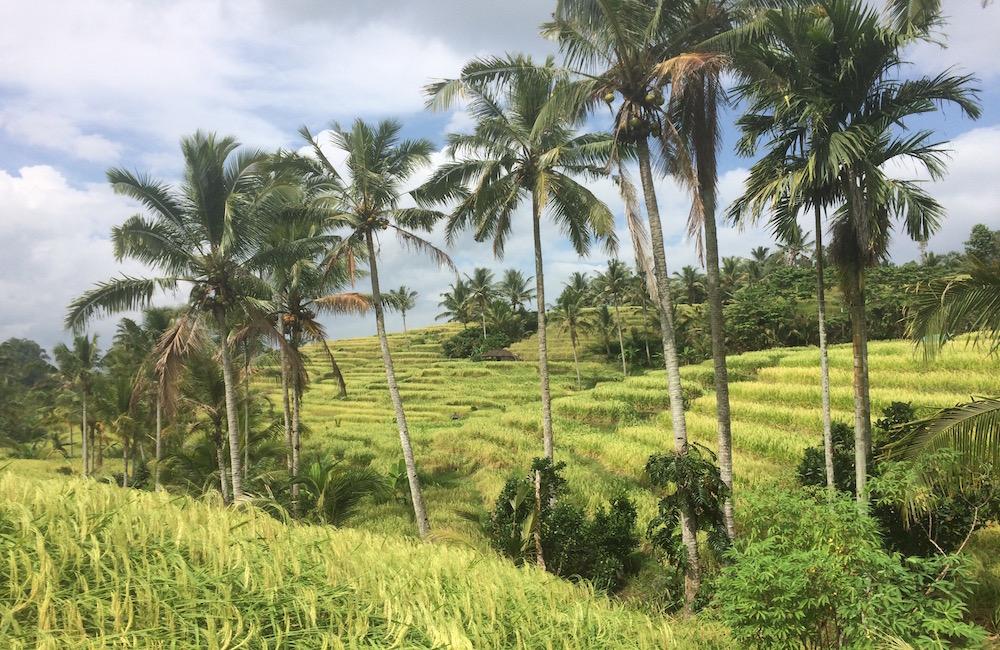 Jatiluwih Rijstvelden Bali