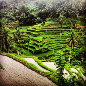 tegallalang-rice-terrace