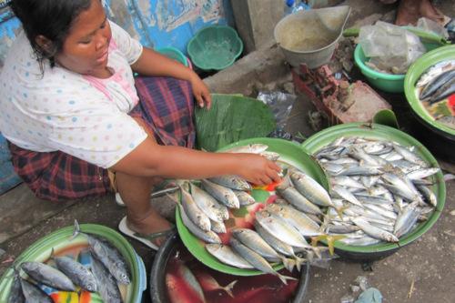 Marche aux poissons d'Ampenan à Lombok