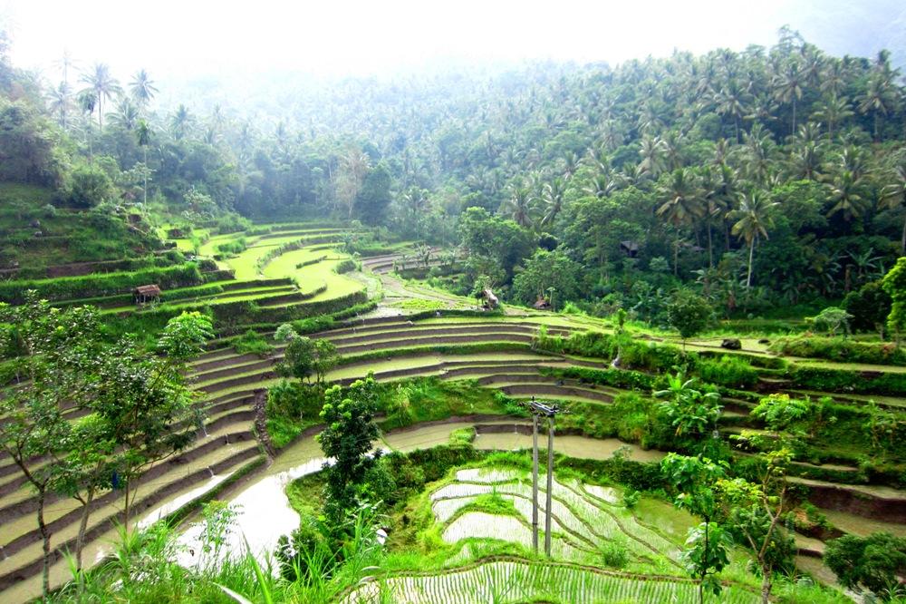 Brina rice fields, Karangasem, Bali