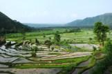 Les rizières d'Amlapura