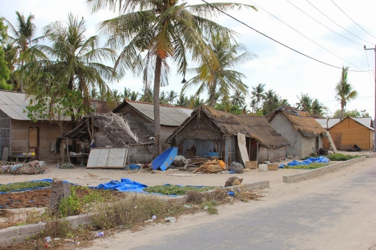 La pauvreté à Nusa Lembongan (2)