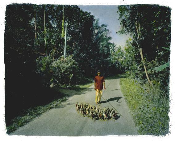 Le garçon aux canards © Jean-Marc Dugas
