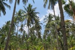 Sortie culturelle à Jembrana (ouest de Bali) avec Agus - Balisolo 201511 (76)