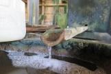 20151130 L'or de Kusamba ou la fabrication du sel balinais - Balisolo, Eko Santoso (16)