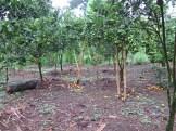 Balade dans les rizères de Langgahan avec Made Ocong - Balisolo (33)