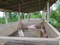 Balade dans les rizères de Langgahan avec Made Ocong - Balisolo (4)