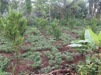 Balade dans les rizères de Langgahan avec Made Ocong - Balisolo (5)