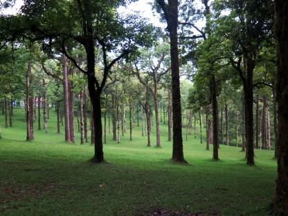 Le jardin botanique de Bali - Bali Botanic Garden - Bedugul - Balisolo (20)