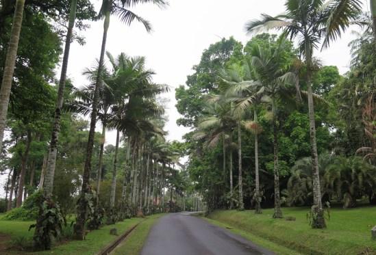 Le jardin botanique de Bali - Bali Botanic Garden - Bedugul - Balisolo (38)