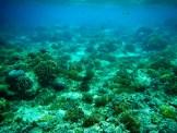 Snorkeling a Gili Trawangan - Balisolo (11)