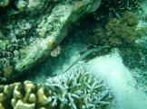 Snorkeling a Gili Trawangan - Balisolo (14)