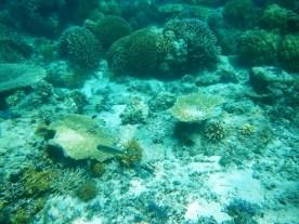 Snorkeling a Gili Trawangan - Balisolo (15)