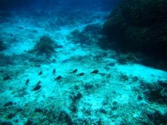 Snorkeling a Gili Trawangan - Balisolo (16)