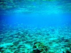 Snorkeling a Gili Trawangan - Balisolo (24)