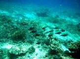 Snorkeling a Gili Trawangan - Balisolo (28)
