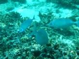 Snorkeling a Gili Trawangan - Balisolo (29)