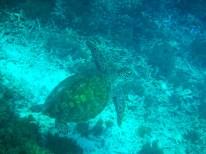 Snorkeling a Gili Trawangan - Balisolo (36)