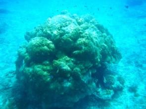 Snorkeling a Gili Trawangan - Balisolo (8)