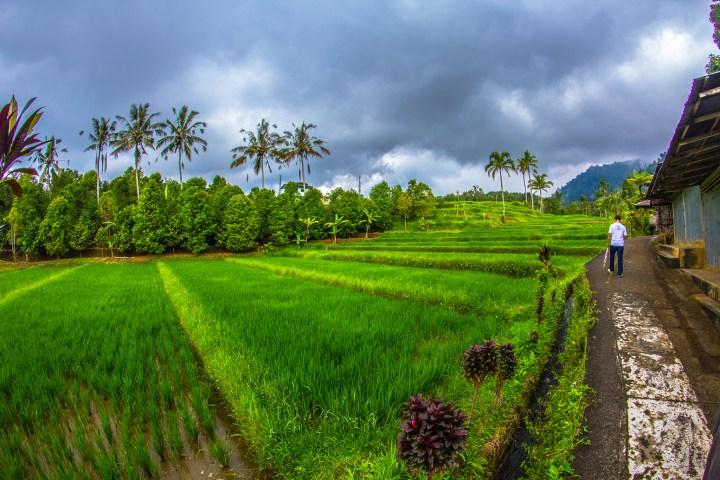 Bali après la pluie par Asyraf Zahardin