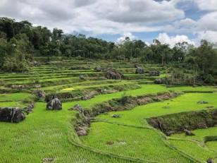 RYAN GERENTINO RANTELILI - Guide Anglophone Balisolo en Sulawesi (4)