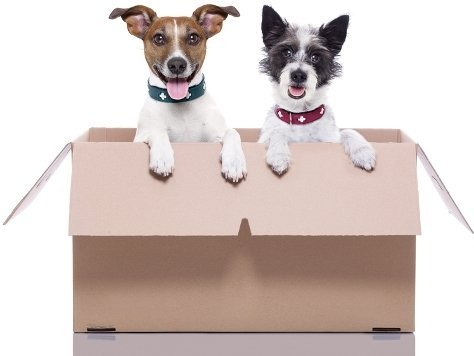 cardboard box with 2 dogs at bali store luggage