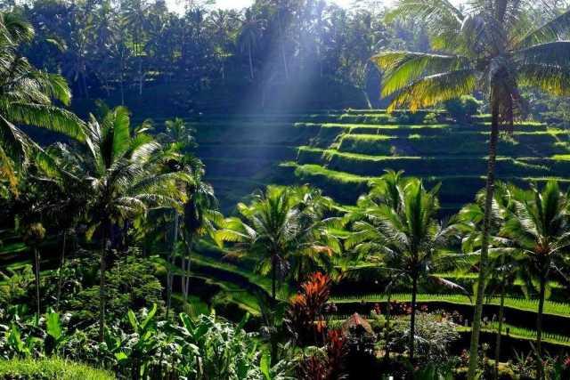 wisata bali keren rice terrace