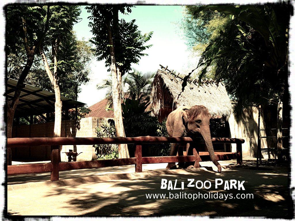 gajah bali zoo