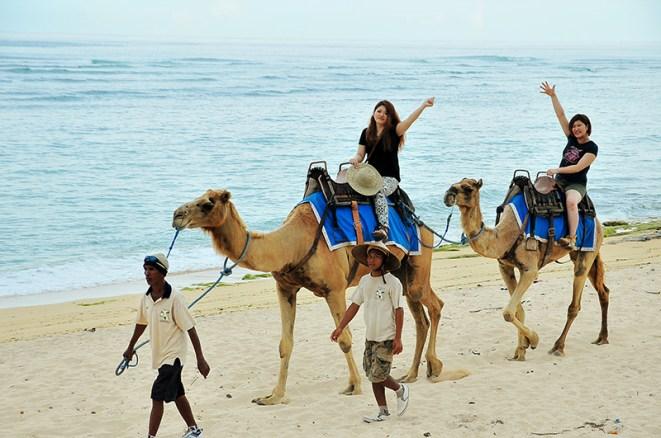 bali, camel, ride, bali camel, nusadua, nusadua bali
