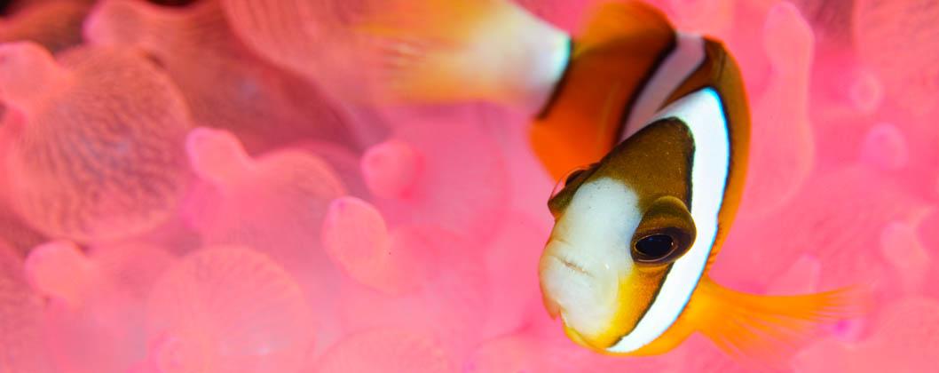 Bali School of Underwater Photography, Nemo