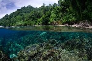 Bali School of Underwater Photography Split Photo