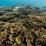 Corals of Raja Ampat
