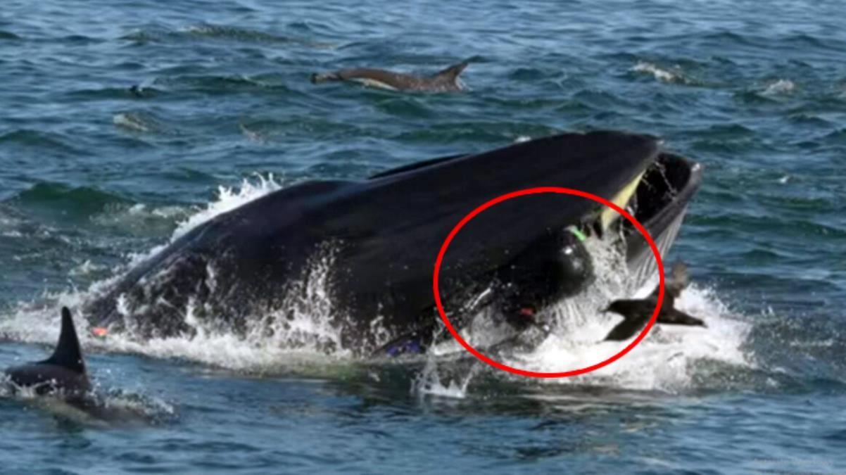 40 saniye balinanın ağzında kalan balıkçı, nasıl kurtulduğunu anlattı: Bir patlama gibiydi